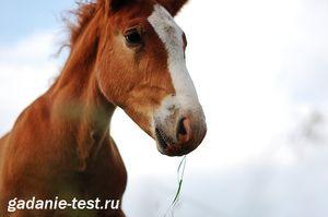 Онлайн тест - Какая Вы лошадь