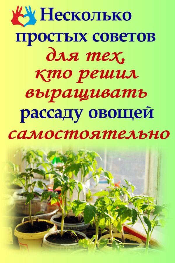 Несколько простых советов для тех, кто решил выращивать рассаду овощей самостоятельно  афиша https://gadanie-test.ru/