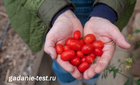 Черри плоды - https://gadanie-test.ru/