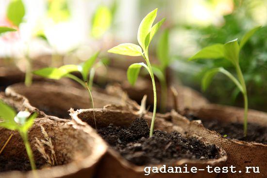 Несколько простых советов для тех, кто решил выращивать рассаду овощей самостоятельно  https://gadanie-test.ru/ ростки