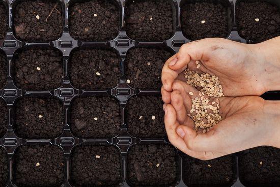 Несколько простых советов для тех, кто решил выращивать рассаду овощей самостоятельно  Семена https://gadanie-test.ru/