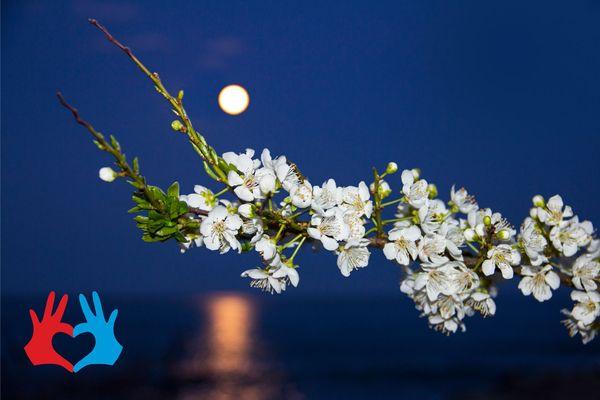 Денежный лунный календарь на апрель 2020 - https://gadanie-test.ru/