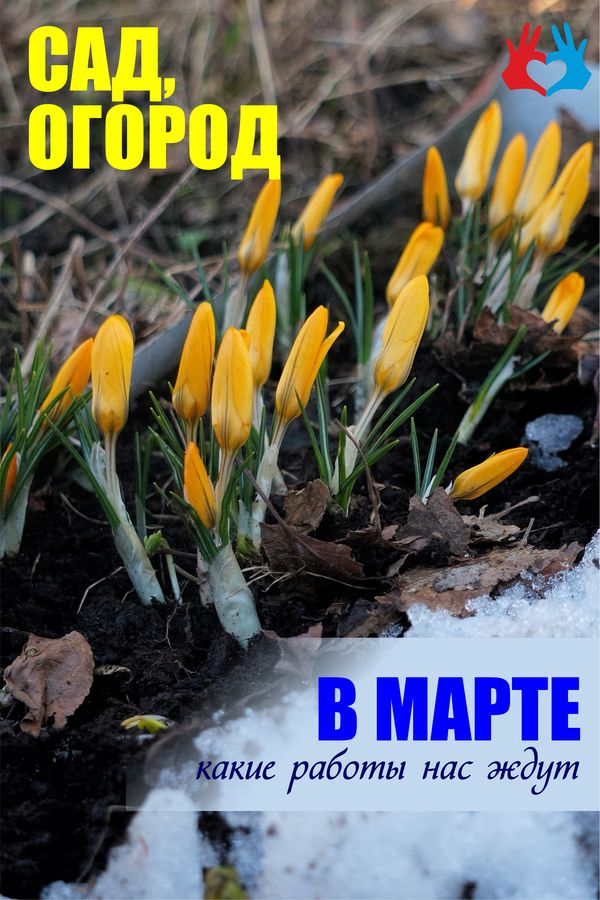 Сад и огород в марте - https://gadanie-test.ru/