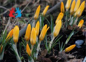 Сад и огород в марте