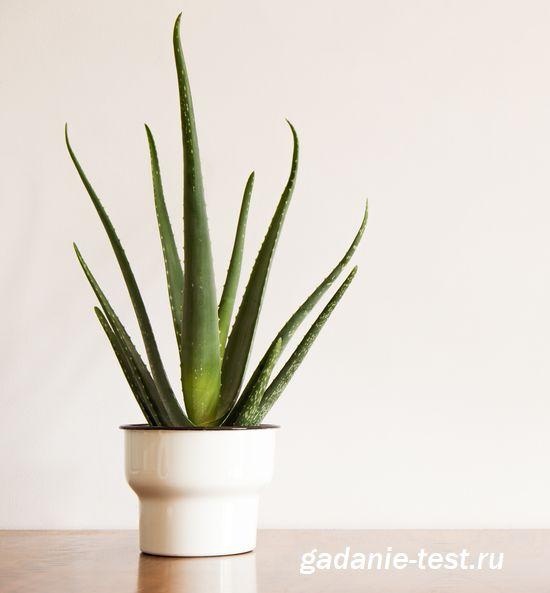 алоэ  https://gadanie-test.ru/