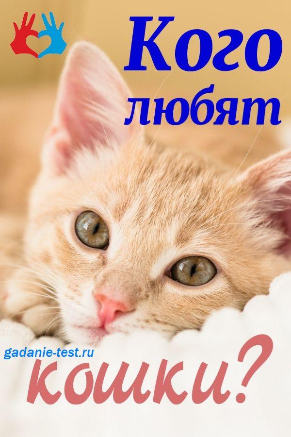 Кого любят кошки афиша https://gadanie-test.ru/