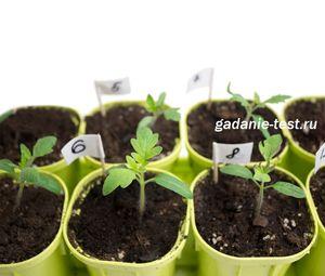 Три подкормки полезные для рассады овощей