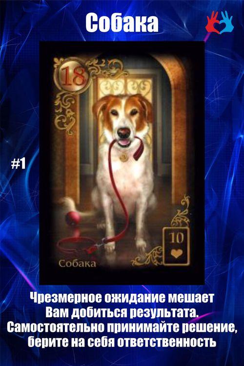 Карта #1 - Собака - https://gadanie-test.ru/
