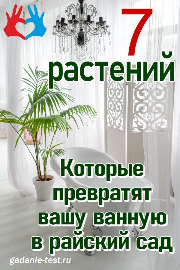 7 растений, которые сделают райский сад из вашей ванной  https://gadanie-test.ru/
