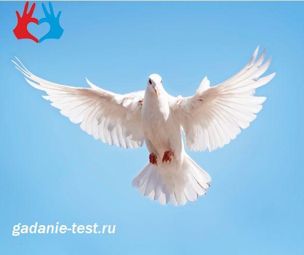 Тест личности - Что вы за птица?