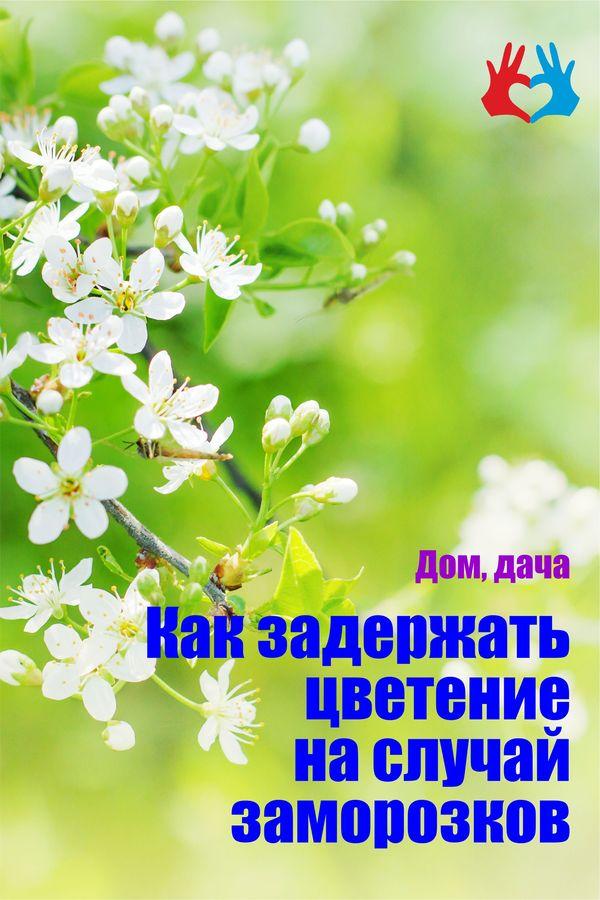 Как задержать цветение на случай заморозков - https://gadanie-test.ru/