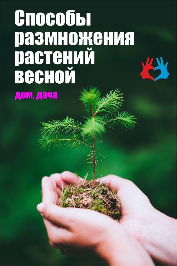 Способы размножения растений весной - https://gadanie-test.ru/