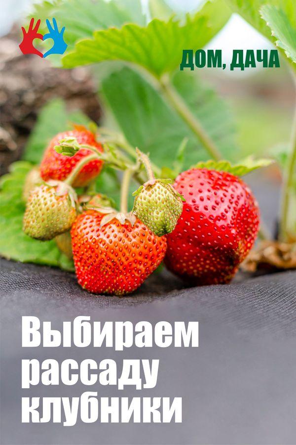 Выбираем рассаду клубники - https://gadanie-test.ru/