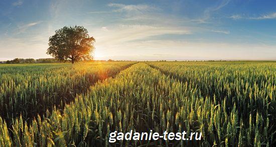 Нумерология - Место силы по дате рождения https://gadanie-test.ru/
