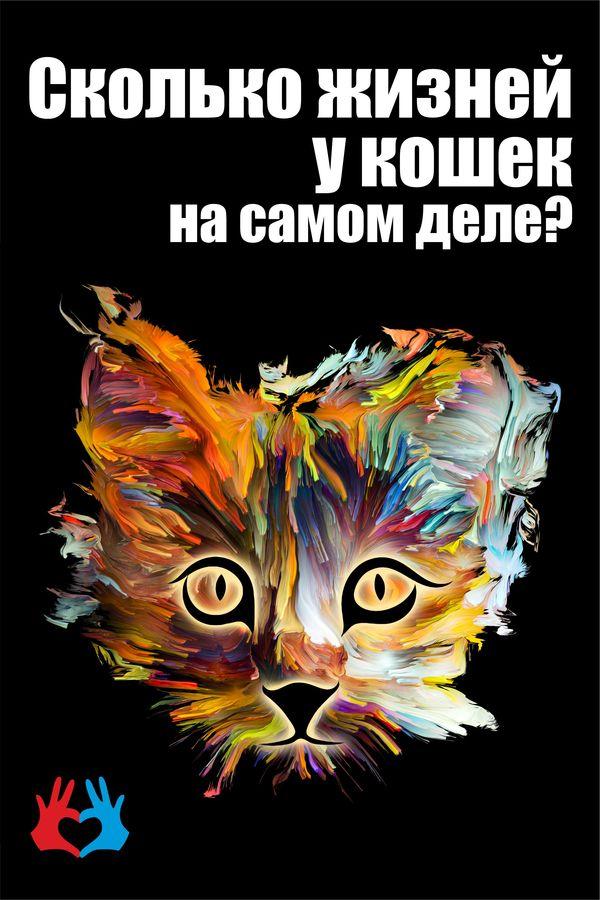 Сколько жизней у кошек на самом деле? - https://gadanie-test.ru/