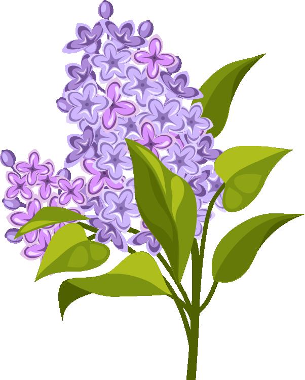 Быстрый тест на желание Цветок 3