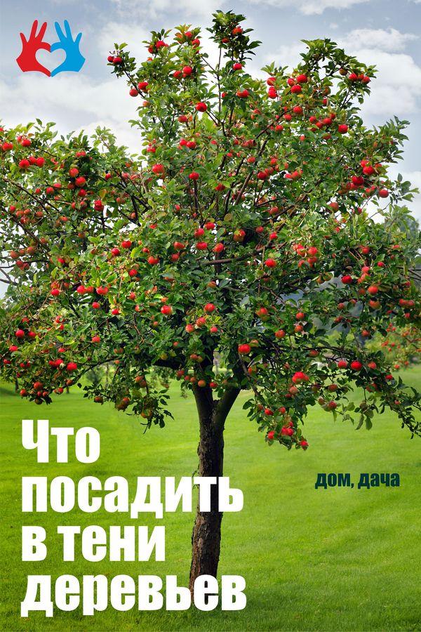 Что посадить в тени деревьев - https://gadanie-test.ru/